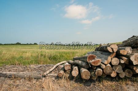 ambiente albero industria legno suolo terra