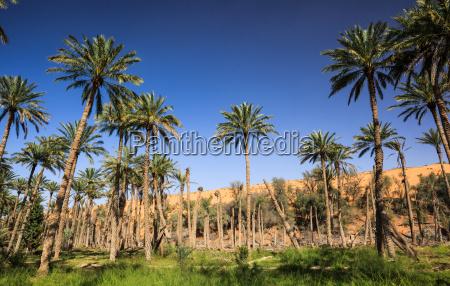 oasi nel mezzo di un deserto