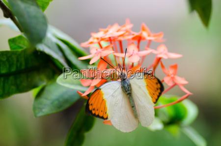 insetto fiore pianta farfalla primavera fondale