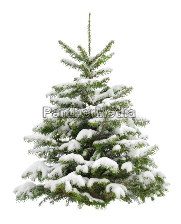 perfect snowy christmas tree isolated