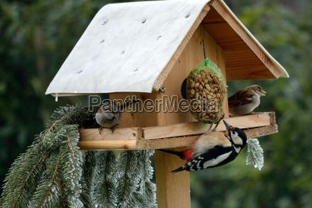 birdhouse con buntspecht