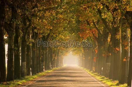 albero marrone quercia viale strada autunno