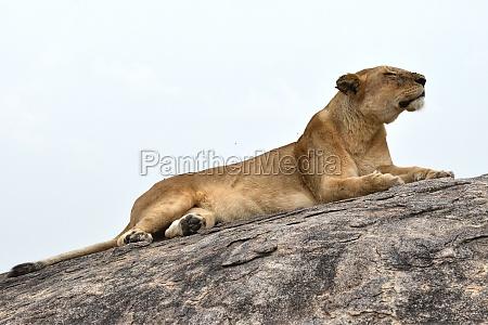 africa kenia safari tanzania