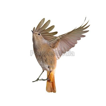 rilasciato uccello uccelli appartato isolato ali