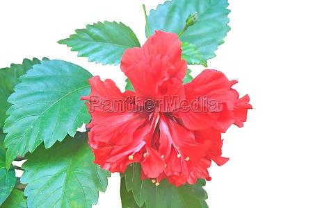 salute fiore pianta fioritura fiorire estate