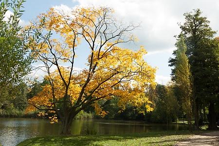 autumn tree on the lake