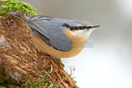 inverno animale uccello animali uccelli