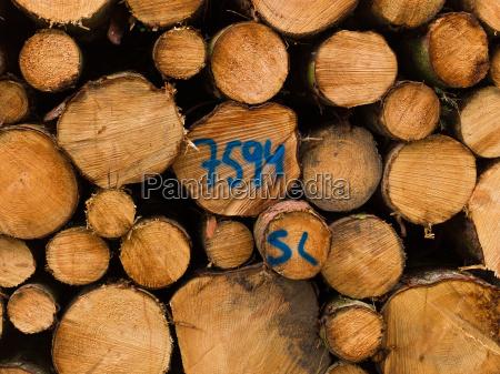 albero inverno legno estate camino natura