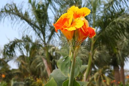 fiore, pianta, fioritura, fiorire, fiori, cuba - 10820616
