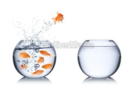pesce concetto di coraggio