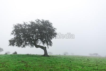 andare ambiente albero collina parco legno