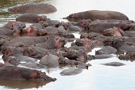 viaggio viaggiare mammifero kenia animali natura