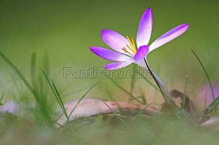 ambiente fiore pianta fioritura fiorire fiori