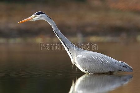 ambiente animale uccello animali uccelli airone