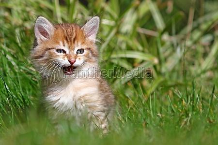 ambiente animale animali gatti cucciolo gatto