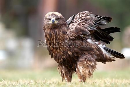 animale uccello animali uccelli rapace