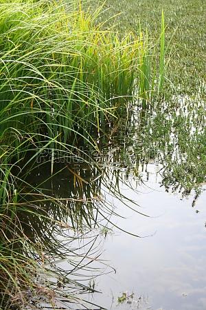 biotopo acqua dolce stagno acqua lago