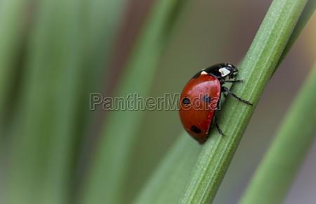 insetto scarafaggio in salita salire scalare