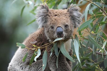 foglia albero parco animale mammifero orso