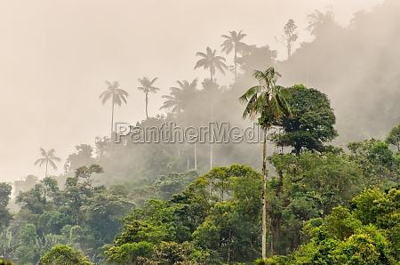 foschia giungla sudamerica ecuador foresta pluviale