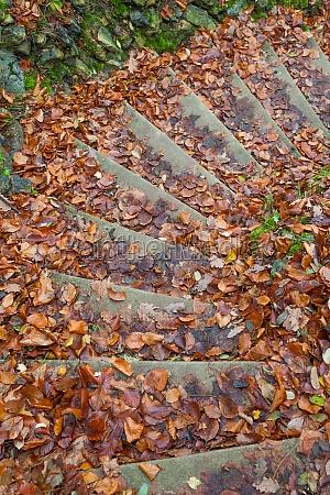 stair foliage