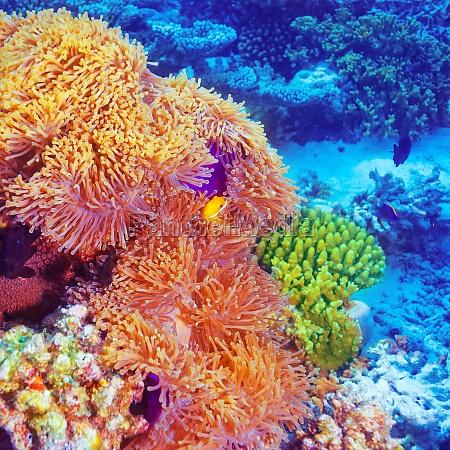 bello bella esistere vivere maldive marino
