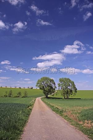 percorso di campo con 2 alberi