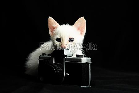 gatto bianco giovane bambino