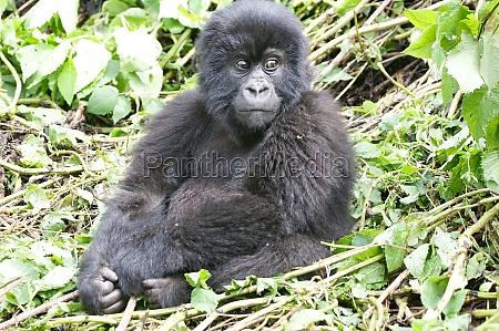 viaggio viaggiare parco animale fauna turismo