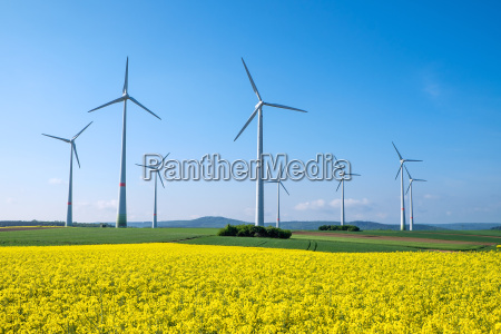 rapeseed field and wind turbines in