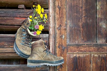 alpi fiore fiori scarpe in salita