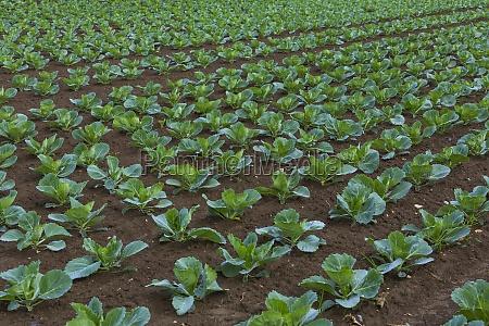 cibo bio verde marrone agricoltura campo