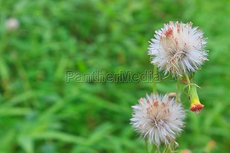 foglia dettaglio ambiente fioritura fiorire flora