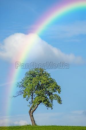 albero con il rainbow