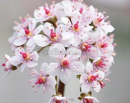 fiore pianta fioritura fiorire flora botanica