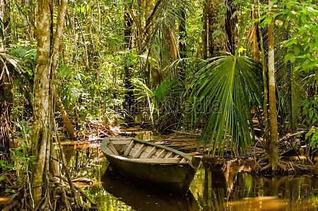 barca a remi nella giungla