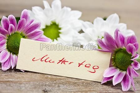 fiore fiori tipografia festa della mamma