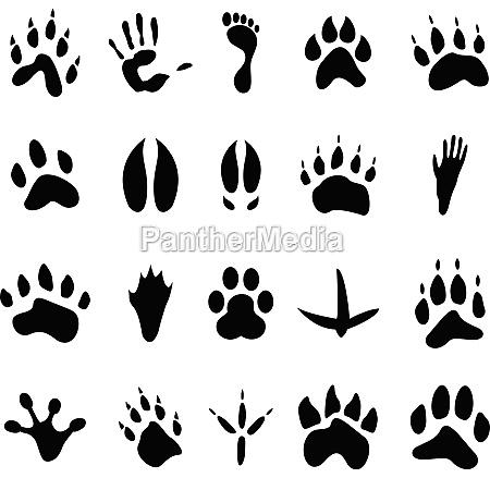 raccolta di 20 animali e impronte