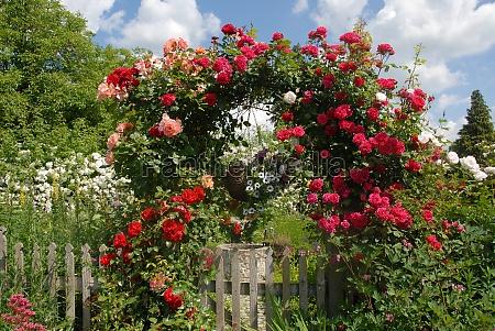 giardino fiore fiori rose casa colonica