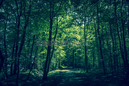 bello bella foglia ambiente albero parco