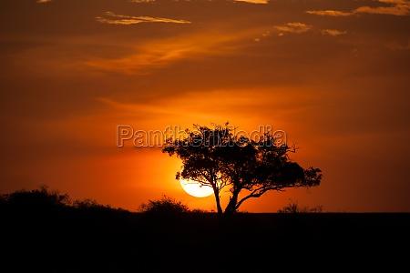albero tramonto africa kenia safari cielo