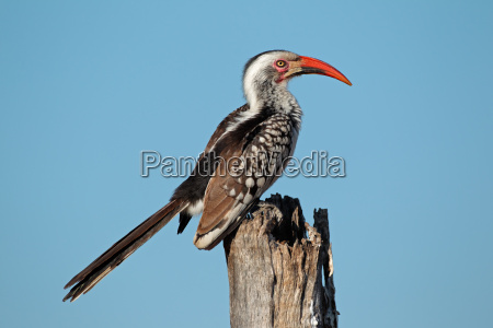 animale uccello fauna africa colorato ala