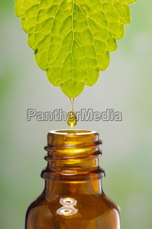 medicina alternativa con estratto di una