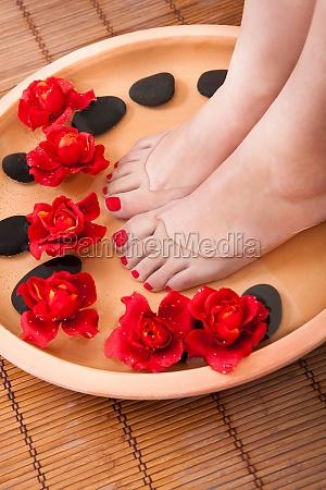 donna fiore pianta rosa piedi magnificenza