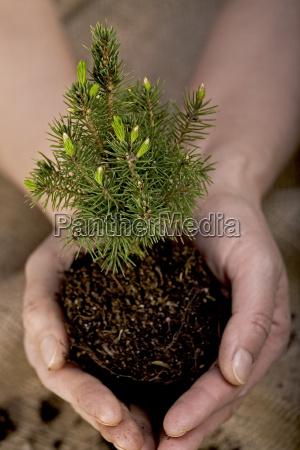 albero piccolo poco breve saltare balzare
