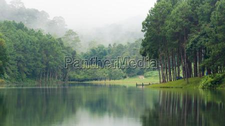 pino mattutino paesaggio natura pini domani