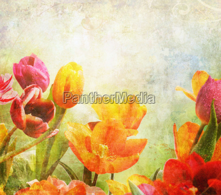 tulips colorful drip old