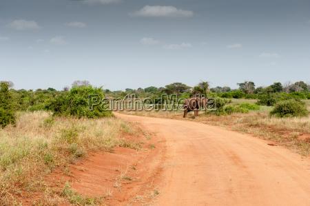 animale africa elefante avorio zanna savana