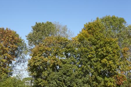 foresta di latifoglie corone di