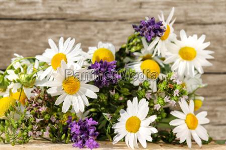 omeopatia con erbe e piante medicinali